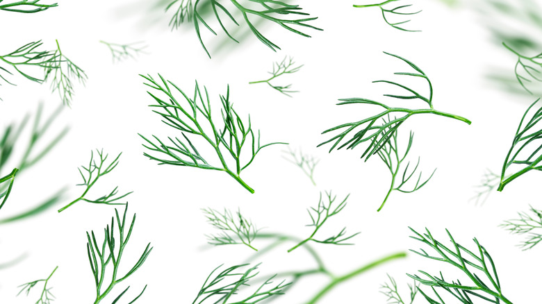 Scattered dill weeds