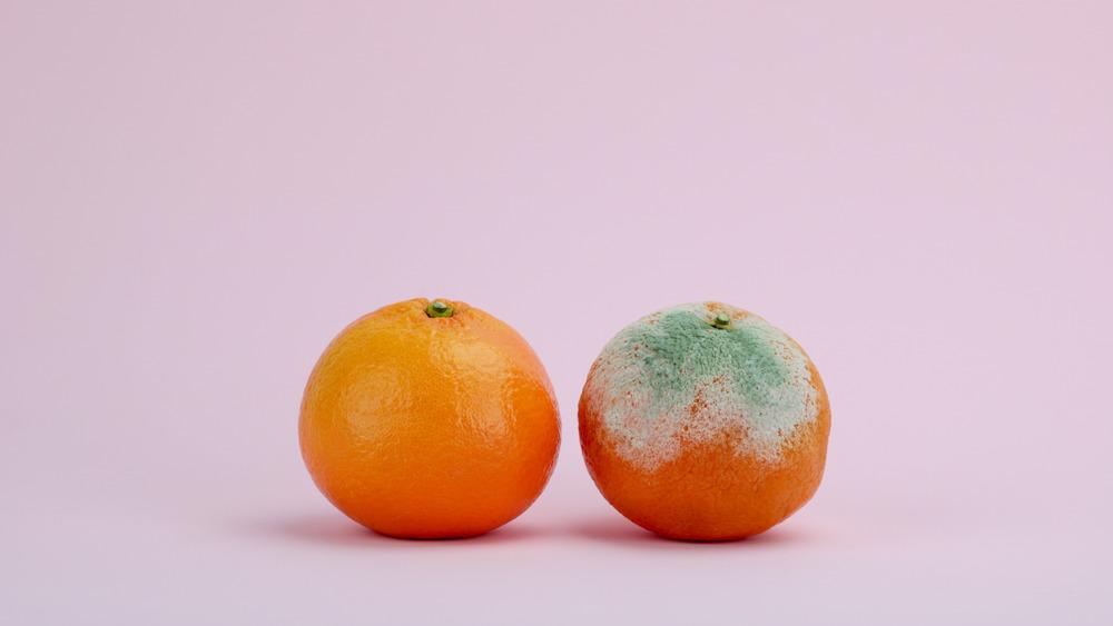 Moldy orange on a plate