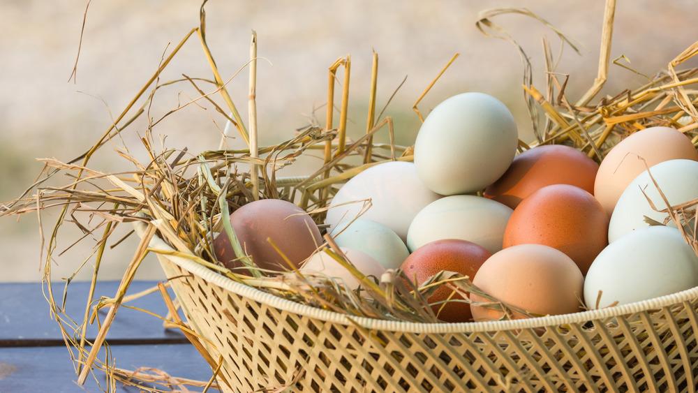 Multi-colored chicken eggs