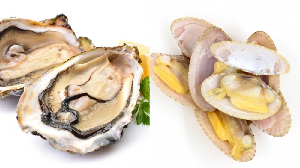 oyster vs clam