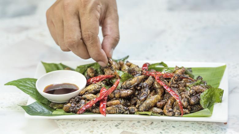 fried cicadas