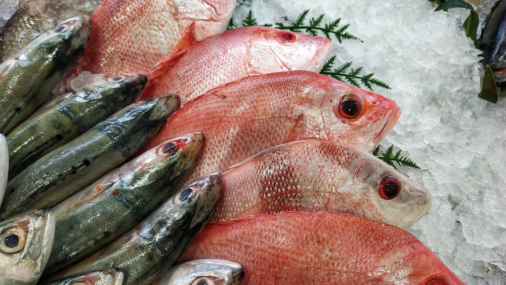 fish sitting on ice