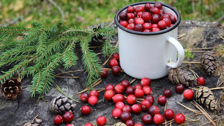 Mug of cranberries outdoors