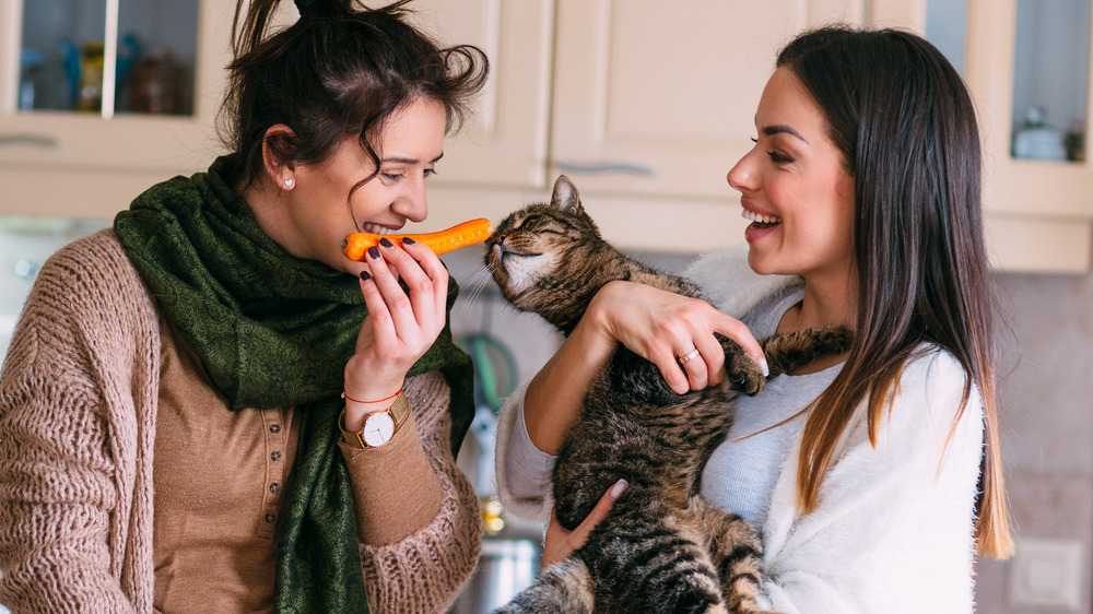 Women playing with a cat in their kitchen