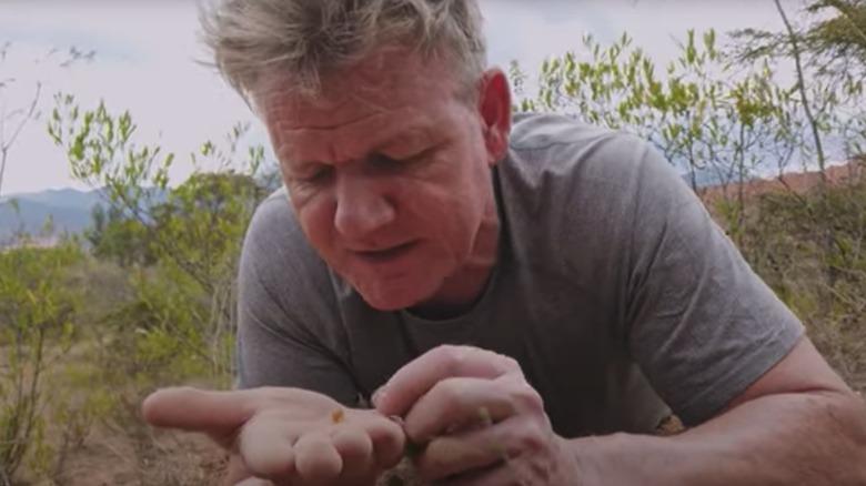 Gordon Ramsay finding ants