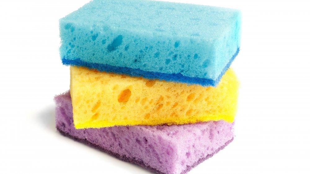 sponge, sponges