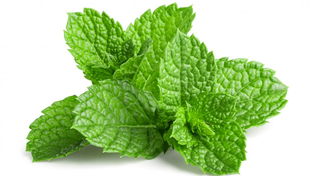 What you can substitute for mint