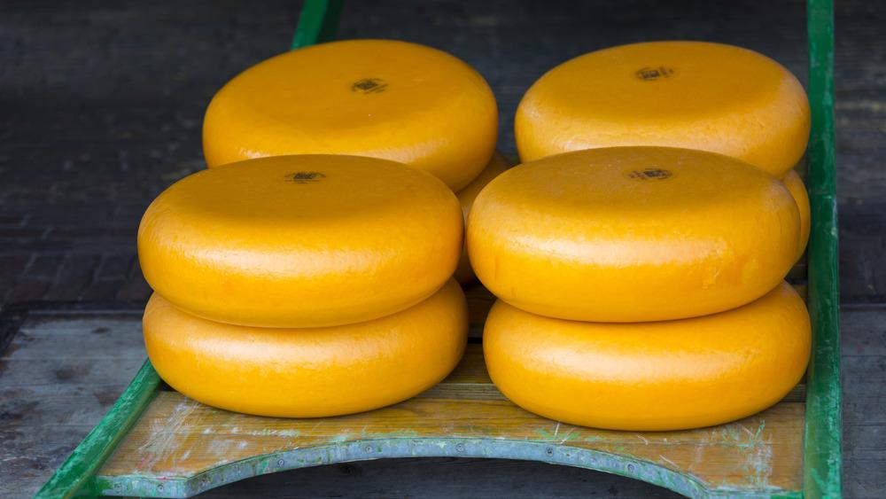 Gouda cheese on a sled