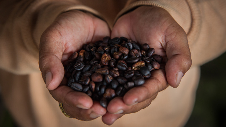 Hands holding roast coffee beans
