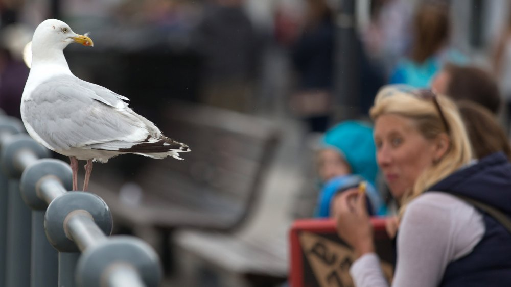 Woman eating while looking at seagull
