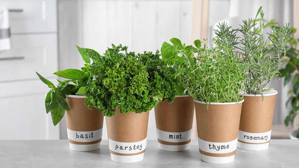 assortment of indoor herbs