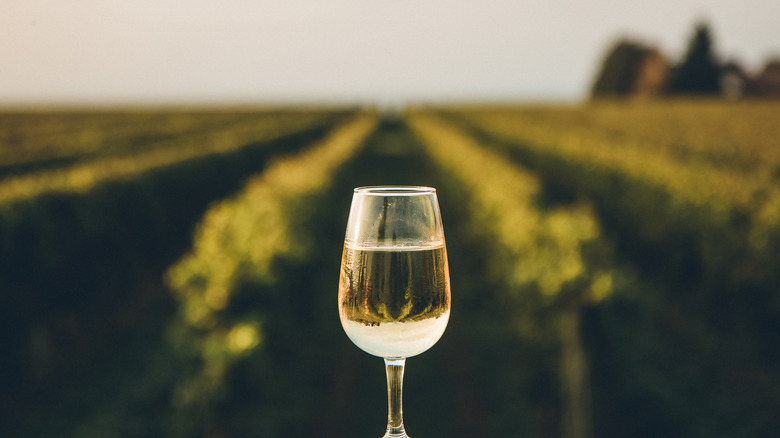 glass of white wine in front of vineyard