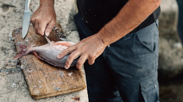 Fisherman cutting fish on wooden board