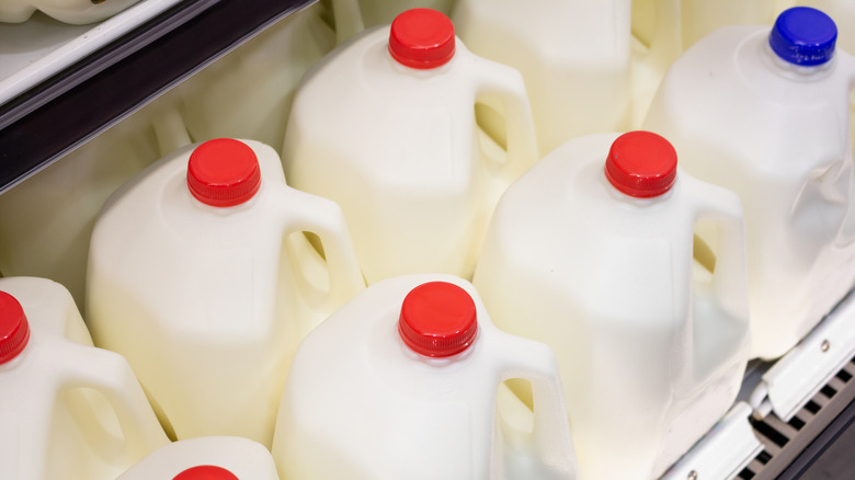 Several gallons of milk in the grocery store