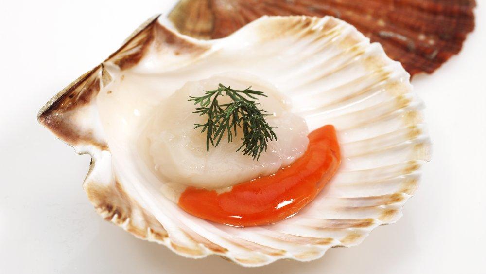 fresh scallops on the shell