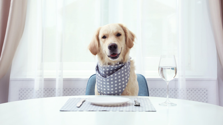 dog sitting at dining table