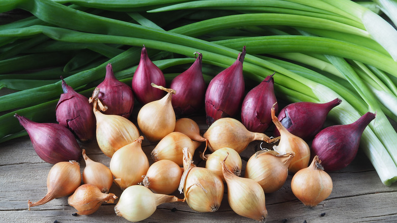 Green onions with multi-colored shallots