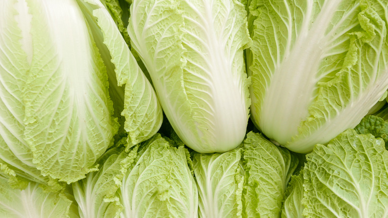 Group of napa cabbages