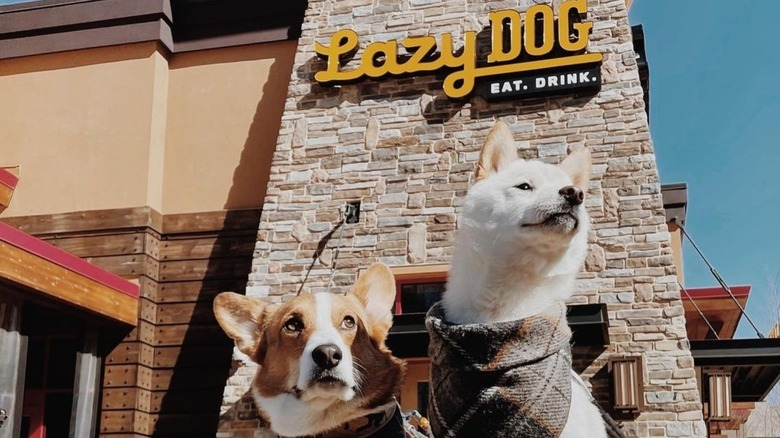 Two dogs at Lazy Dog