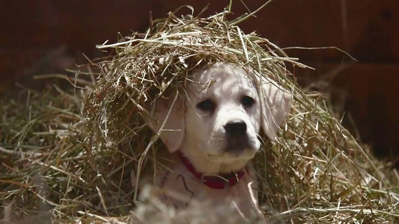 Lost Dog Budweiser commercial