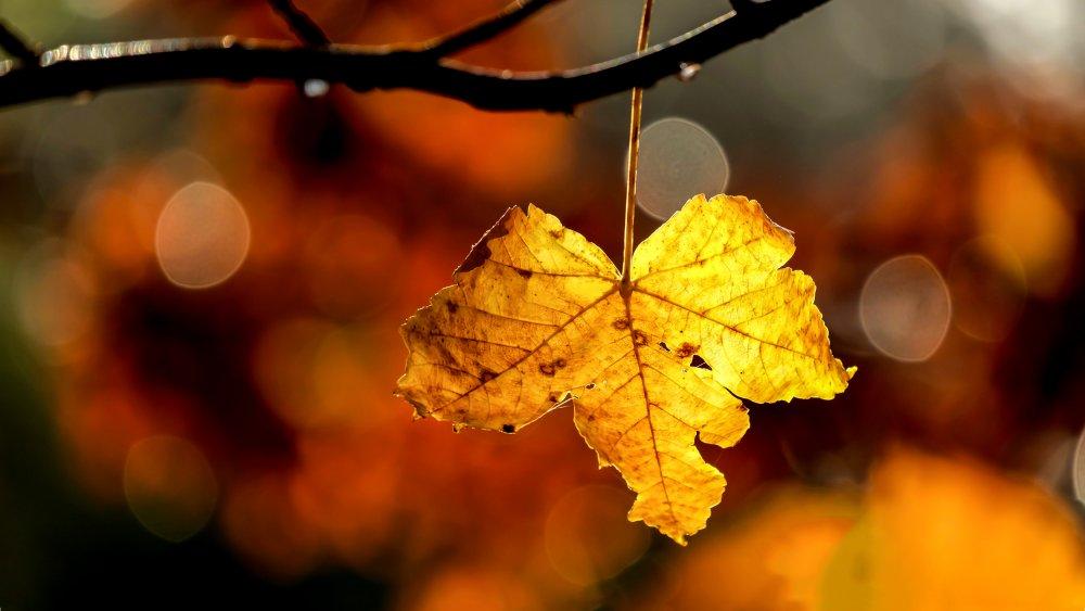 Autumn leaf fall recipes