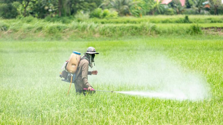 Farm worker spraying chlorpyrifos on crops
