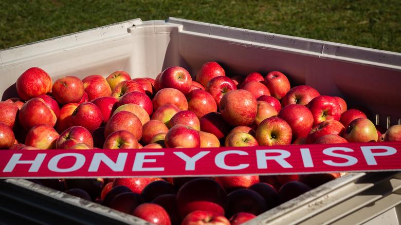 """Bin of apples with """"Honeycrisp"""" sign"""