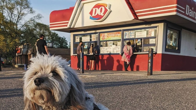 Dog at Dairy Queen
