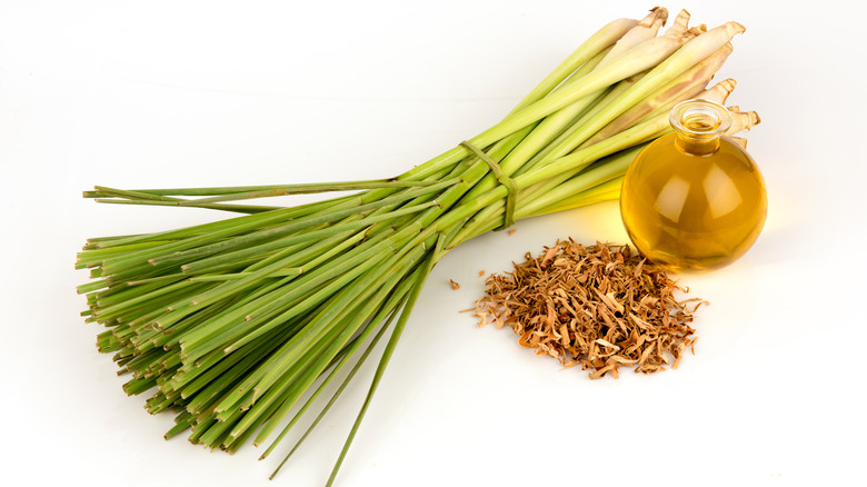 Fresh and dried lemongrass with oil