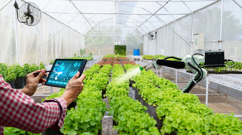 A man holding a tablet and a robot spraying water on plants