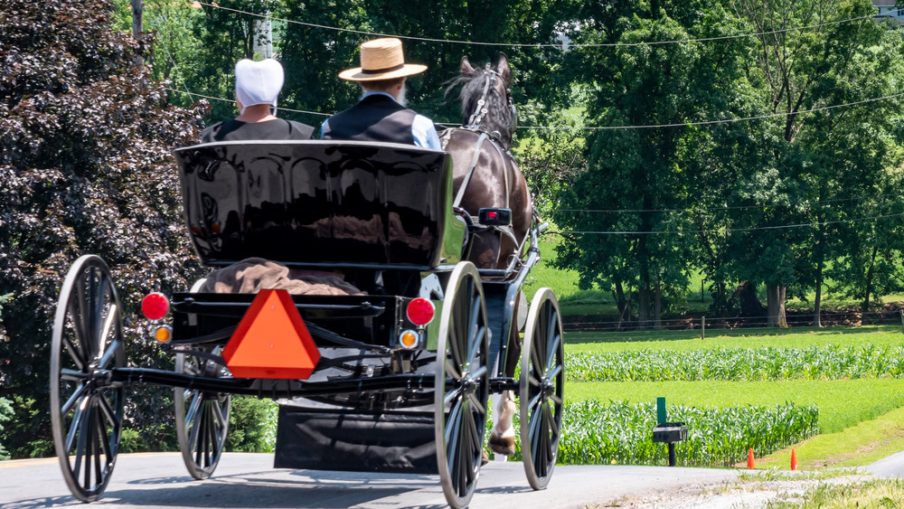 Amish family in buggy on road