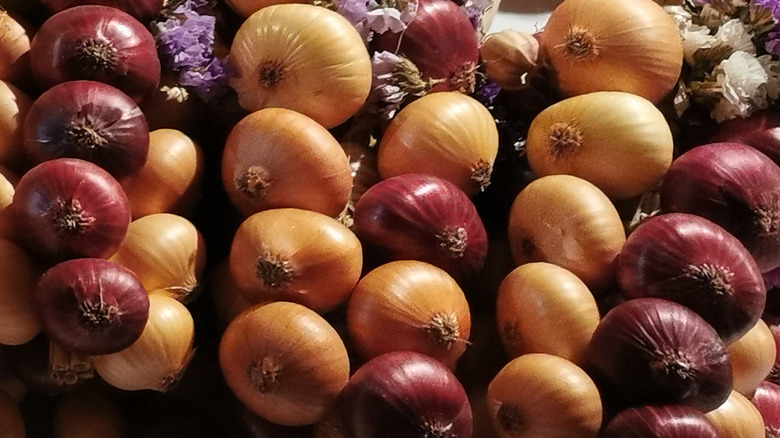 Strings of onion at Bern's Onion Market