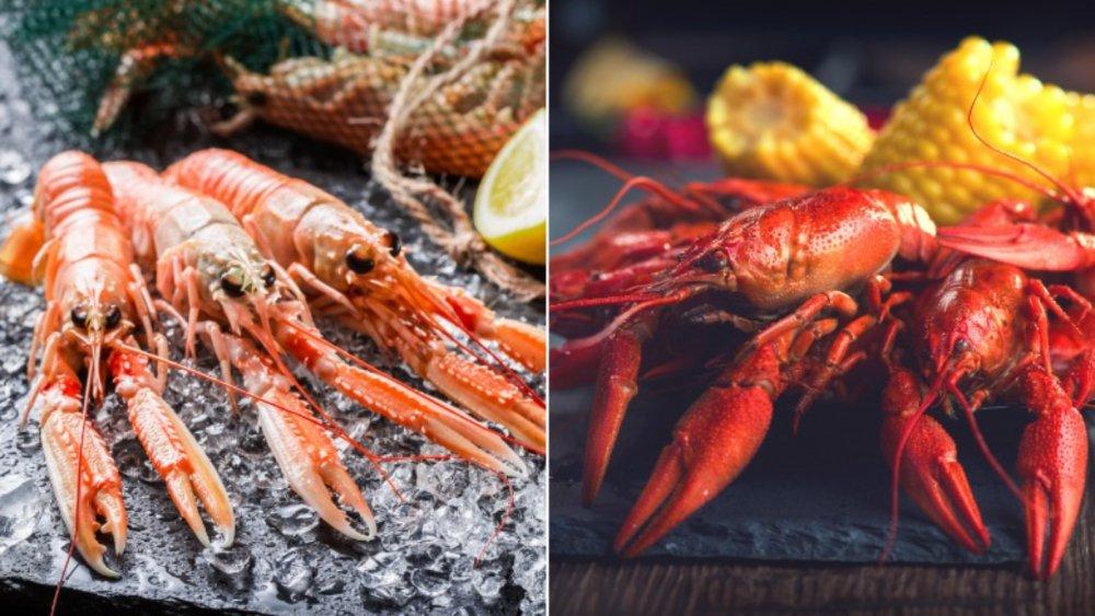 langoustines and crawfish
