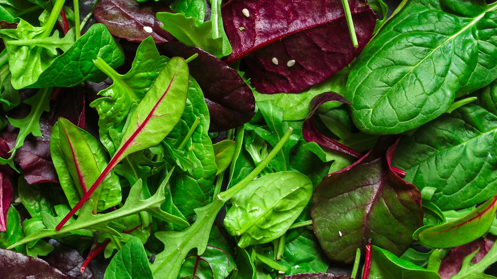 Spinach and chard leaves