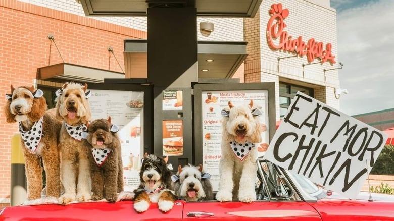 Dogs celebrating Chick-fil-A Cow Appreciation Day 2019