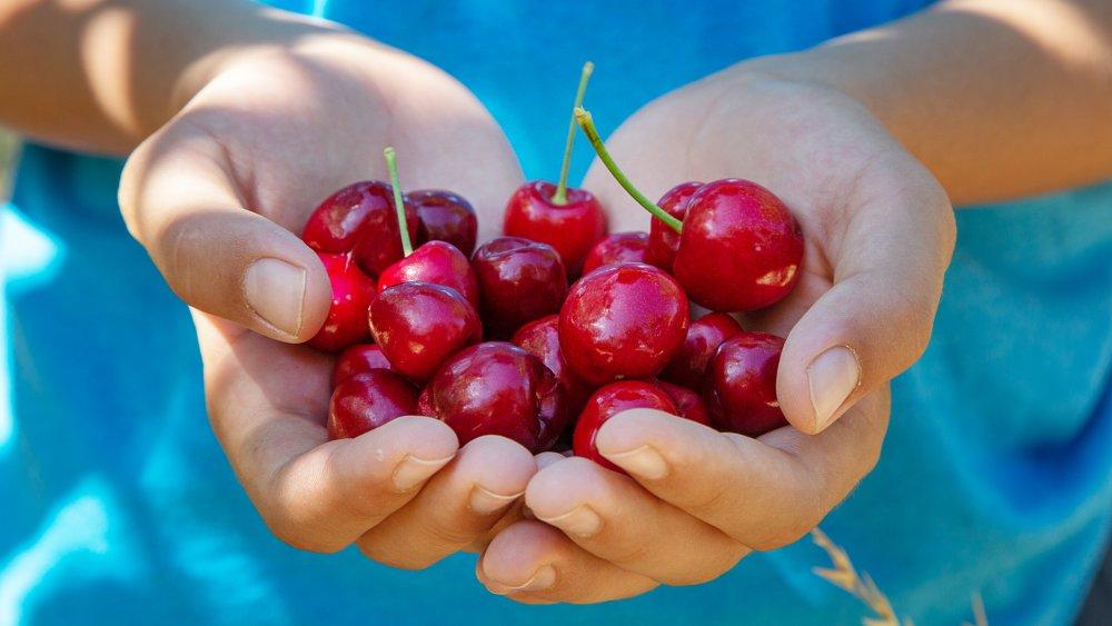 dangers of cherries