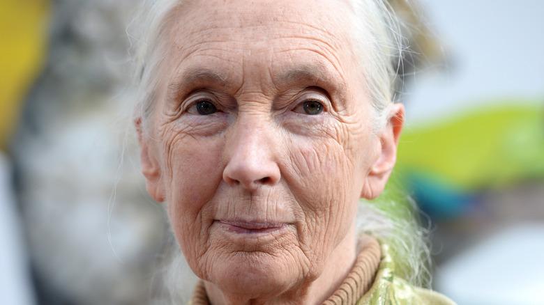 Jane Goodall at speaking engagement