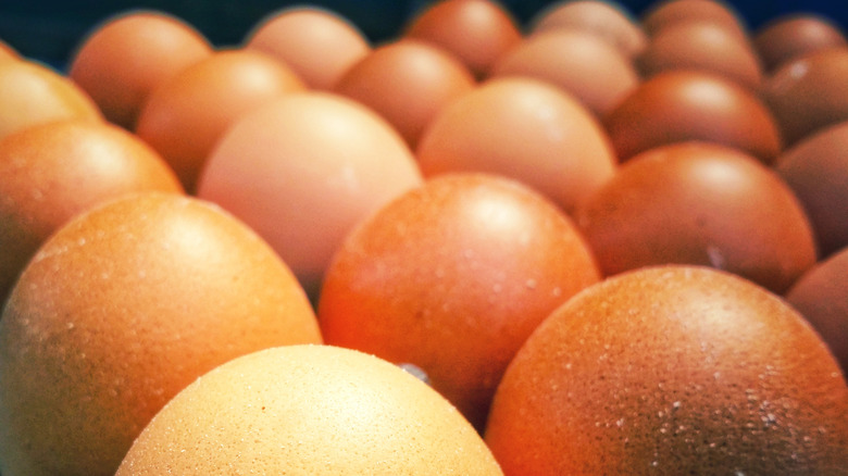 So. Many. Eggs.