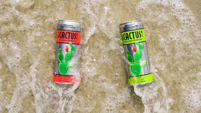 Cactus water in brown sand
