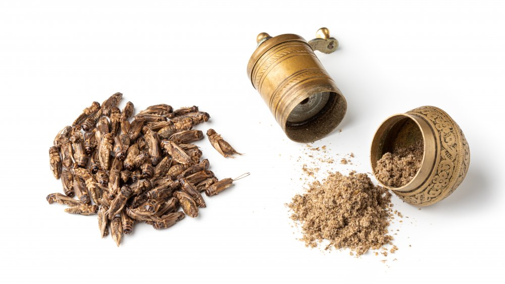 Crickets and cricket flour in grinder