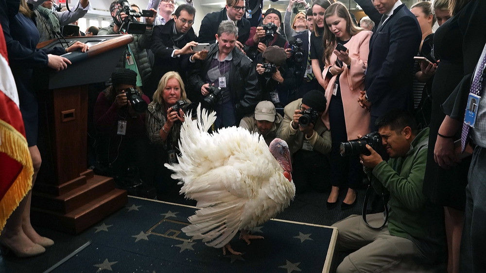 A turkey in the White House is flooded with photographers