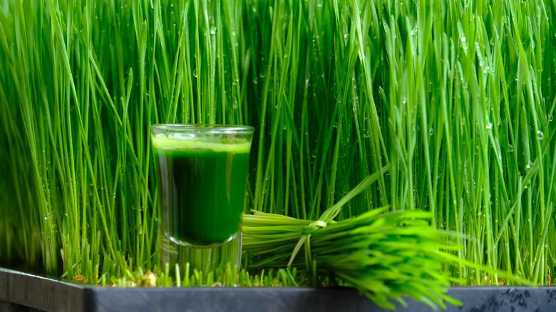 grass juice