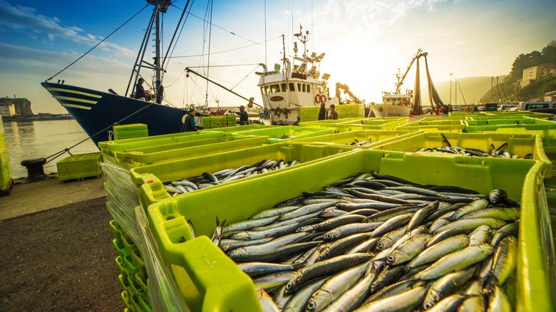 fishing boat unloading catch
