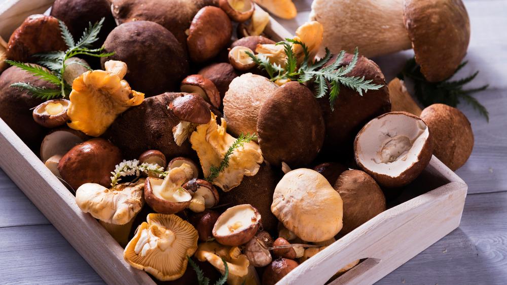 Basket full of mushroom varieties