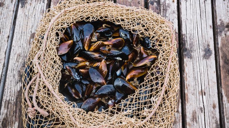 Mussels in a net on a pier