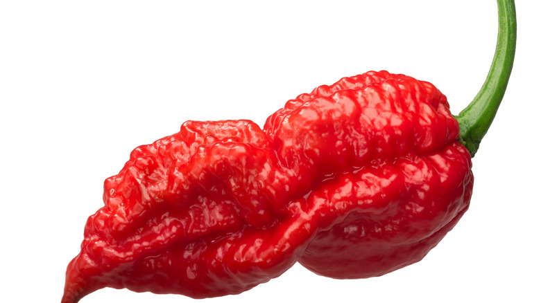 Closeup of ghost pepper