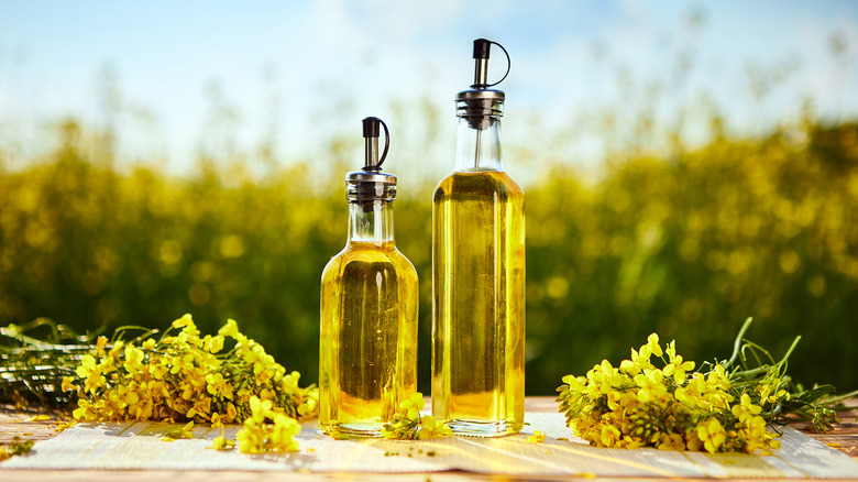 rapeseed and canola oil bottles
