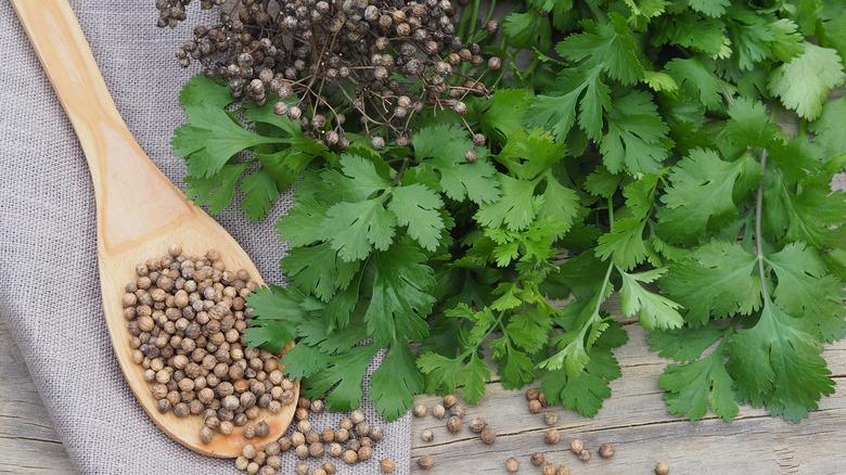 How to store coriander