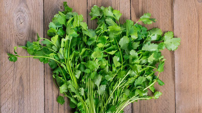 Bunch of cilantro on a wood background