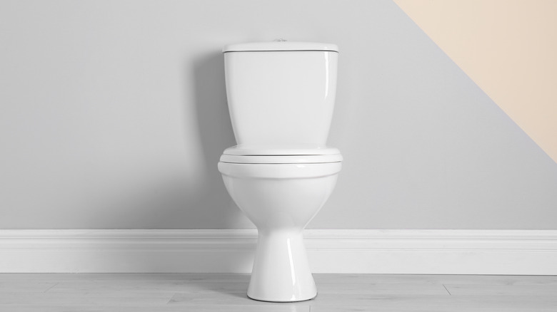 toiley bowl
